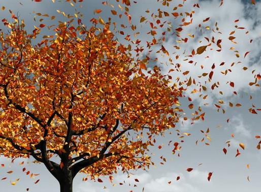 Balance in the Changing Season