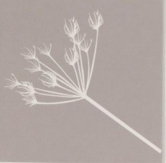 STOREFACTORY Streichholzschachtel mit Zweig-Motiv