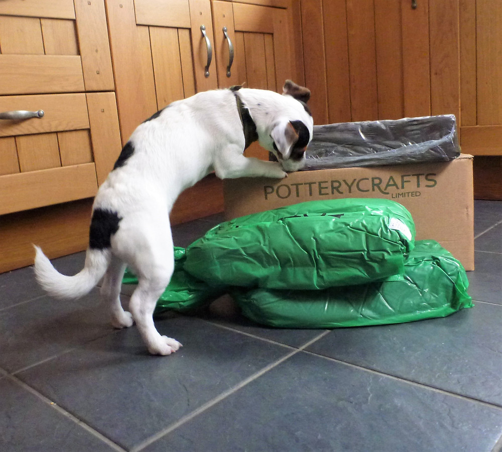 Barley exploring a CRZyBest Clay Delivery