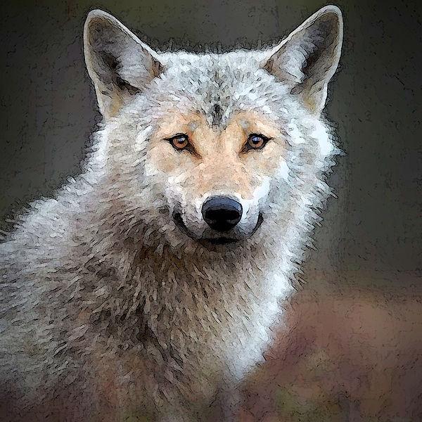 Wolf.watercolor..jpg