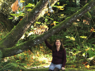 Forest Bathing Event in the Ancient Redwoods