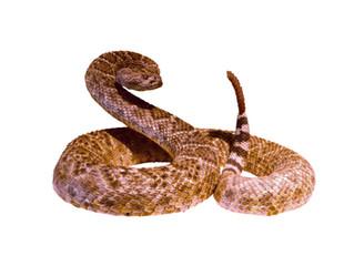 Awakening the Snake