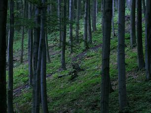 Freebie Short #2 (Forest Shenanigans)