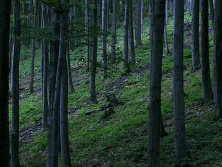 ドイツ語2「ひとつの森と、沢山の木」