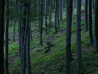 Holzsonnenbrillen, Wald