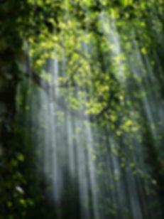 forest-light-nature-70365.jpg