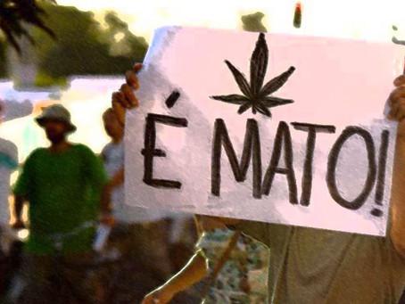 Conselho Regional de Medicina de SP apoia descriminalização do porte de maconha para consumo pessoal