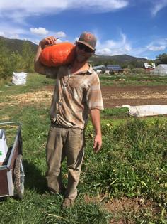 Eric harvesting a Cinderella pumpkin