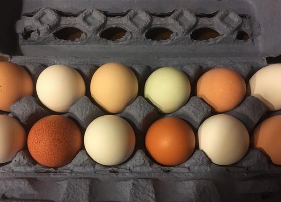 Heritage hen eggs