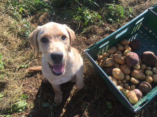 Digging up some spuds with Marlo