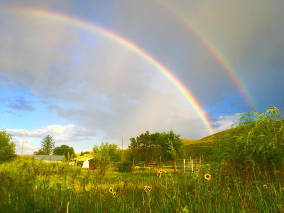 Sweet sunny rainbows