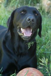 Elko doggy