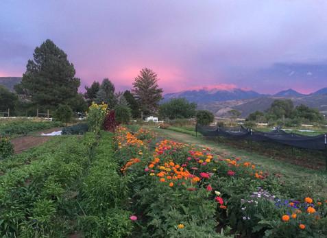 Alpenglow on Mount Gunnison