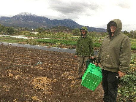 Rainy day harvesting with Ross and Eric
