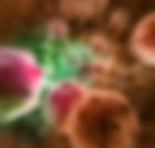 рак шейки матки 3 стадия лечение
