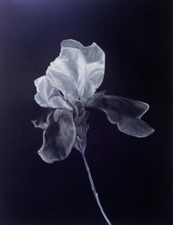 Carboncillo sobre papel negro