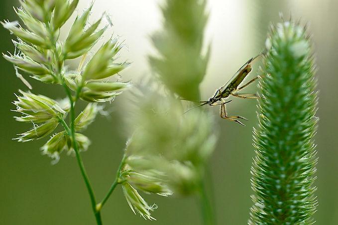 World of grass, Bollnäs garden, Hälsingl
