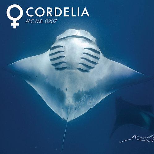Adopt a Manta -Cordelia