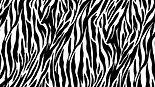 zebra print.jpg