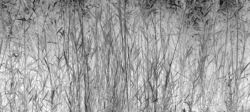 reed-shizhenyu.jpg