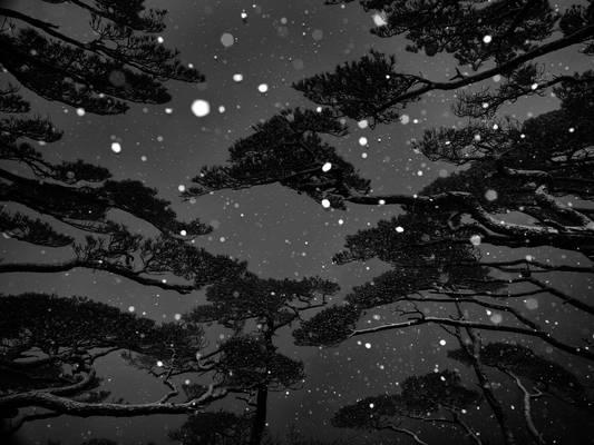 《冬雪》NO.7叶文龙.jpg