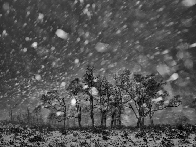 《冬雪》NO.16叶文龙.jpg