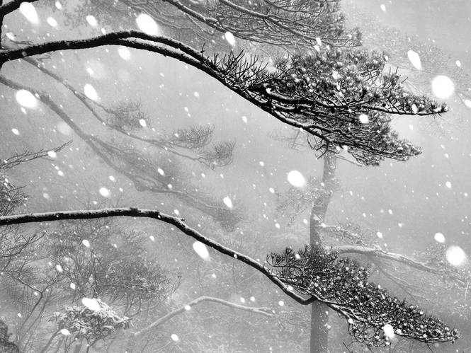 《冬雪》NO.9叶文龙.jpg