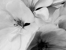 De man die van bloemen hield
