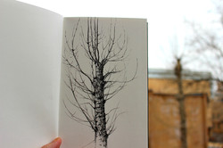 The Moscow Poplar Tree