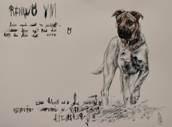 The Dog/Собака