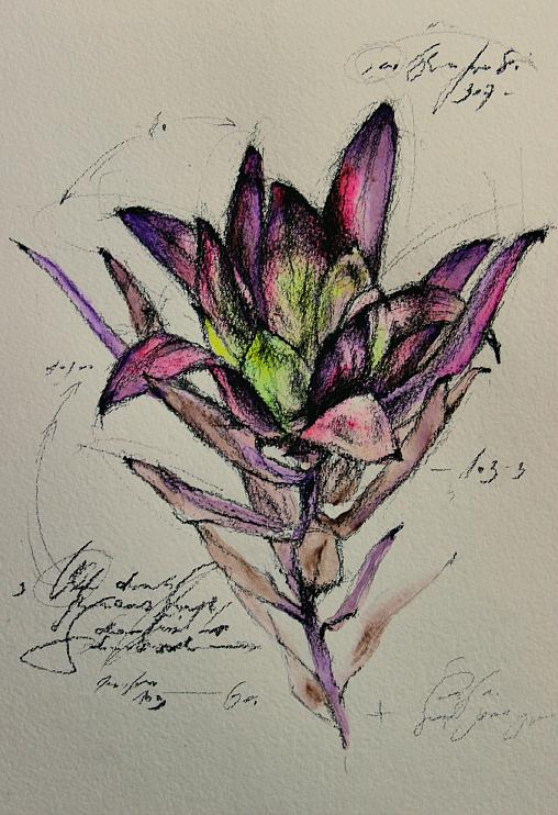 that strange flower