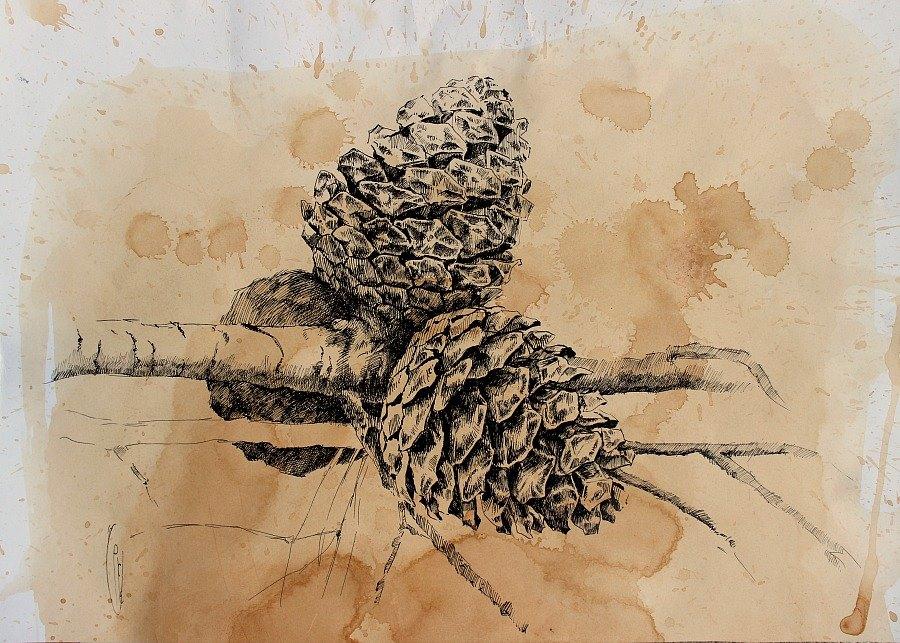 Сосновая ветка/Pine Branch