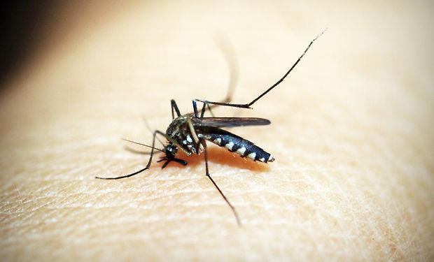 mosquito-1548947_1920.jpg
