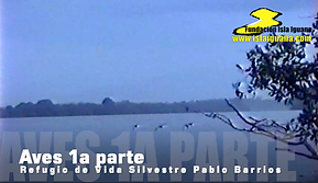 Aves PB1.png