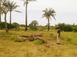 La brousse et l'âne