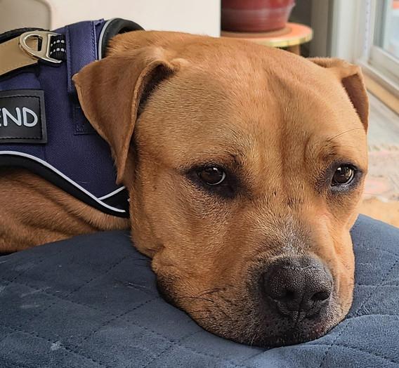 Buddy Best Friend Pillow.jpg