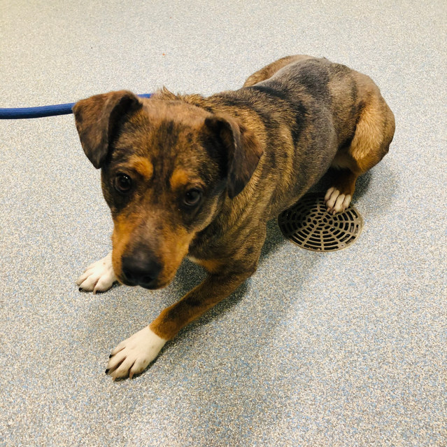 Indy - APPLICATION PENDING