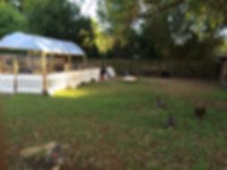 Backyard urban farm