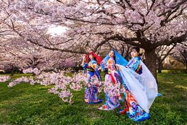 Akio_170414_sakurashikibu-0275.jpg