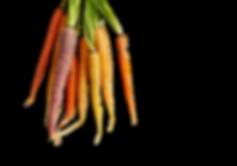 Carrots_02.png