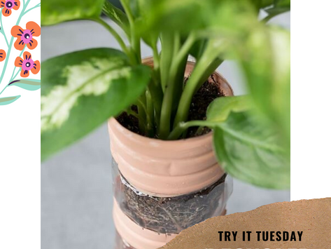Recycled Self Watering Planter - Try it Tuesday