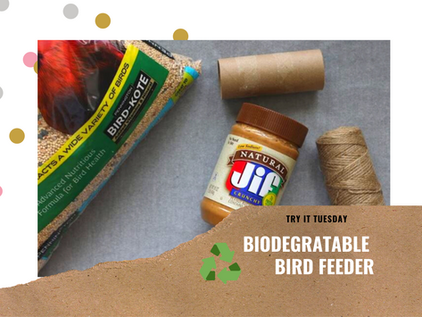 Biodegradable Bird Feeder - Try It Tuesday