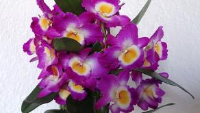 Presajanje orhidej za telebane ;)