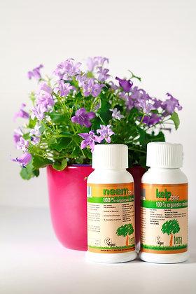 BALKONSKA SIMFONIJA - vse za balkonske rastline