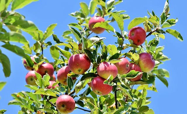 Sajenje sadnega drevja, tudi za naslednje generacije