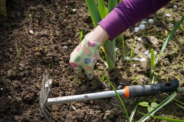 Delo v vrtu - sajenje ni edini opravek, ki ga imamo