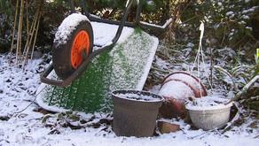 Kako zaščitim sadno drevje pred zimo?