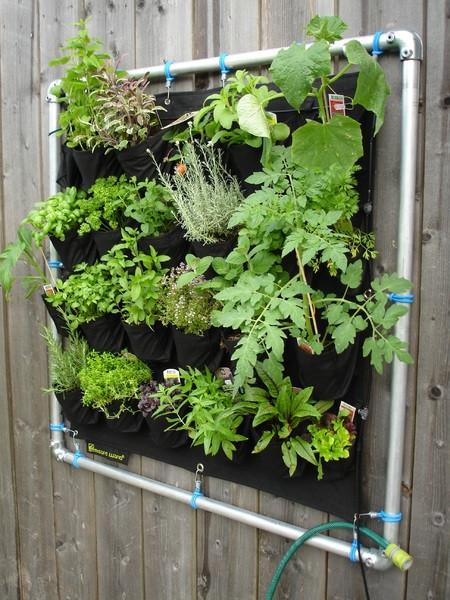 Postavite si steno z zelišči