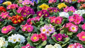 Kako pomladiti svoj vrt?