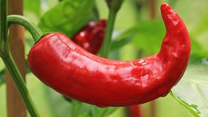 Zakaj paprika ne uspeva?